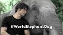WorldElephantDay Vidyut Jammwal Junglee In Cinemas 5th April 2019