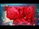 Kizoa Movie - Видео - Создатель слайд-шоу: Моя ароматная компания Prouve