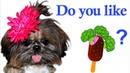Do You Like Broccoli Ice Cream?   Nursery Rhymes Songs with Little Candy