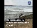 Береговую зону Владивостока так и не очистили от мазута