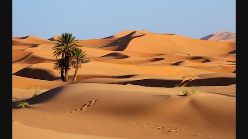 Life in desert Ксюша Аня Кирилл