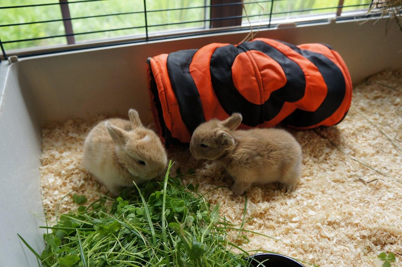 Как кормить декоративного кролика в домашних условиях 920