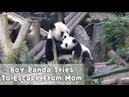 Mom. Please Don't Bite My Head | iPanda