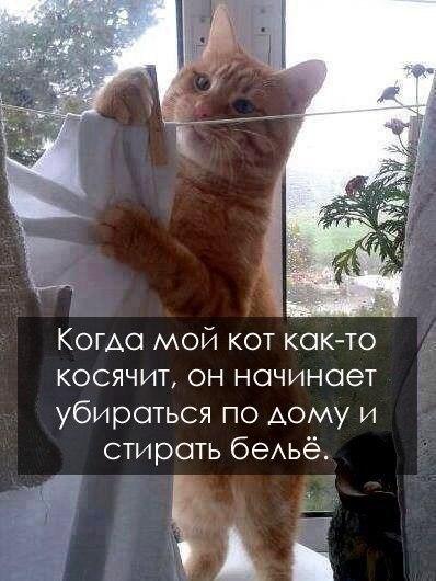 http://cs618117.vk.me/v618117391/11140/Avw9kSZWU8E.jpg