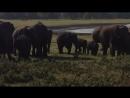 Дикие слоны в национальном парке Шри Ланки