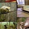15 июня - экскурсия в Воронежский заповедник