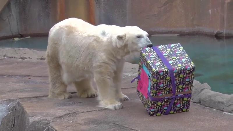Milwaukee County Zoo celebrates polar bear's birthday