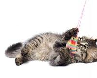 """Оригинал схемы вышивки  """"Играющий котенок """".  Играющий котенок, домашние животные, котенок, позитив."""