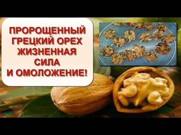 Что произойдет если жевать пророщенные орехи Жизненная сила и полное обновление организма
