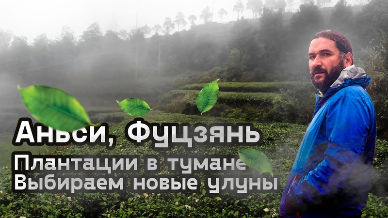 Аньси. Туманные плантации улунов. Дегустируем новые чаи.