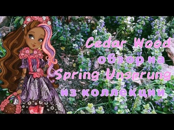 Обзор на Cedar Wood из коллекции Spring Unsprung | Сидар Вуд | Кедра Вуд| Сказка наизнанку | Весна
