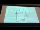 Нервная система 3