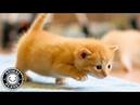 Baby Cats 🔴 Funny and Cute Baby Cat Videos Compilation (2018) Gatitos Bebes Video Recopilacion