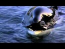 Free Willy Ruf der Freiheit Michael Jackson Will you be there HQ YouTube3