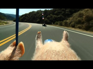 Maxwell the Piggy Meets the Street Luge - New GEICO Commercial