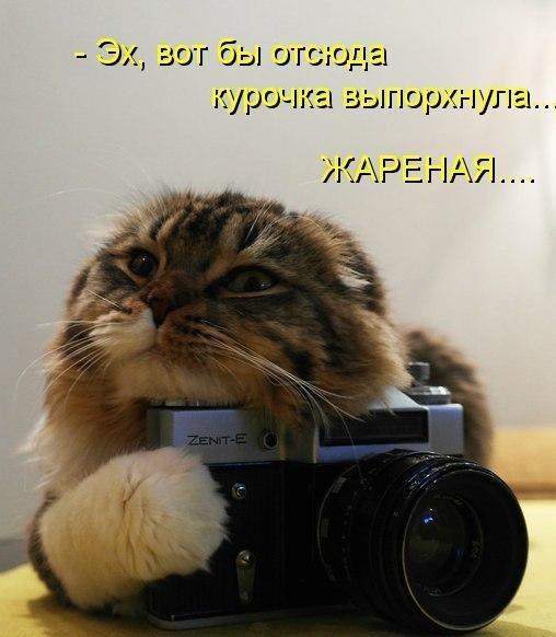 http://cs419330.vk.me/v419330340/6345/zFe6wTgdQZM.jpg