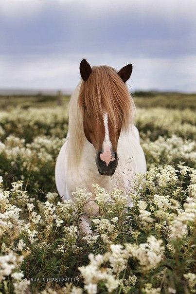 Как ни странно, вместе с конем исчезает из жизни частица красоты. Как паруса в море, конь для нас символ чего-то необычного, романтического. В. Бегунов.