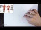 1 Как нарисовать человека в полный рост. Учимся рисовать тело и фигуру Азбука Рисования 12 авг 2018