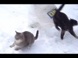 Cute cats Fails Jump From a bag on his neck very funny videos (like a deer jumping)(HD)  (ORIGINAL)
