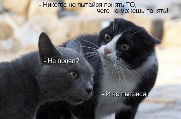 [Изображение: ktRLX7LLUWc.jpg]