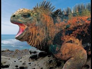 Неизвестная Планета. Родственники динозавров (Галапагосские острова)