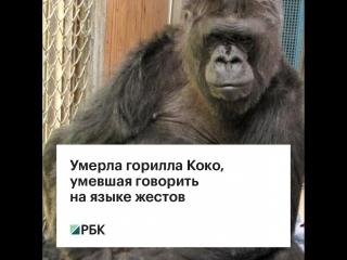 Умерла горилла Коко, умевшая говорить на языке жестов