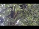 Perhentian Islands 2018 monkeys