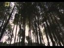 -КАТАНА- Самурайский меч National Geographic