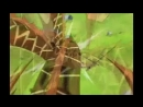 One_Piece_AMV_(This_is_War)-