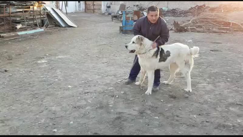 Бархан внук Каракене в узбекистане Однапаметник Арлана