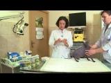 Как правильно использовать ошейник от блох и клещей
