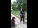 Катюха Мандатра на прогулке - Ротвейлеры руки отгрызали! Это охранная собака, бля! - Вы адекватная, вообще - Я да, бля!