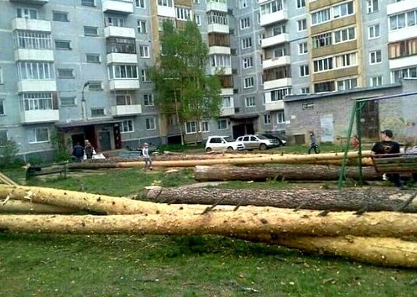 В Усть-Илимске во дворах вырубают вековые деревья