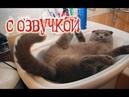 ПРИКОЛЫ С КОТАМИ – Озвучка животных – Смешные коты и кошки от PSO