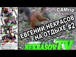 шоу NEKRASOV TV 2016. Евгений [Некрасов ТВ] на отдыхе. #2. белка в Петергофе #деньживотных