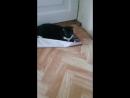 кошка голкипер
