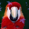 Форум Попугай Парк
