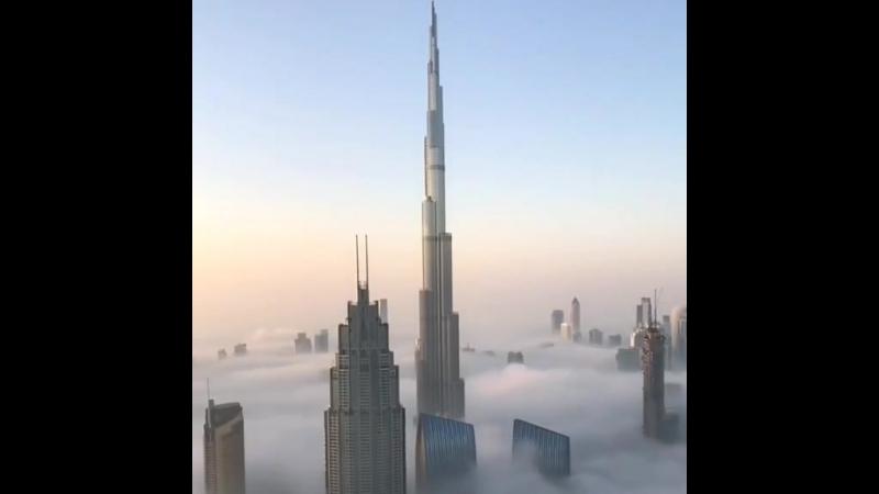 Утро наследного принца Дубая