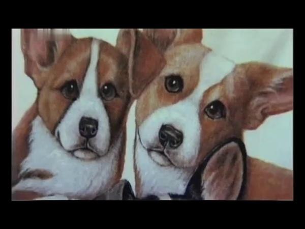 Вельш корги Пемброк 101 dogs