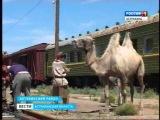 В Астраханской области снимают детскую киноленту