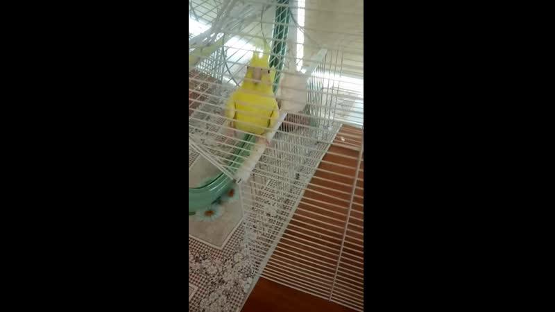 Попуг 🐤