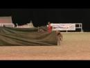 Андалузский жеребец - глаз не оторвать! Spanish Horse андалузская порода лошадей Иппосфера