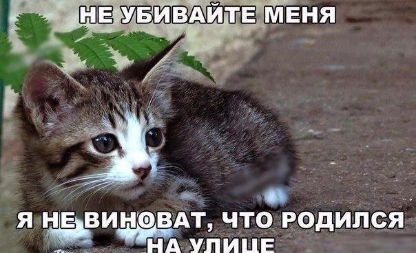 Фото №456242916 со страницы Сони Зборовской