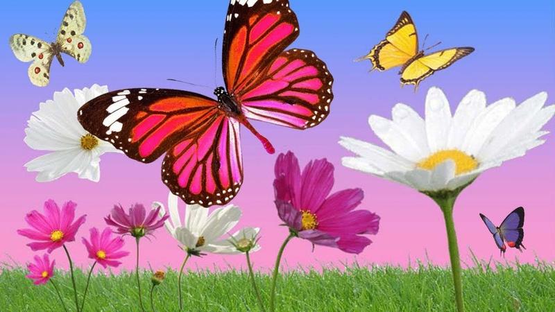 Anny Versini, Jean-Marc Versini - Les papillons et les fleurs (Clip officiel)