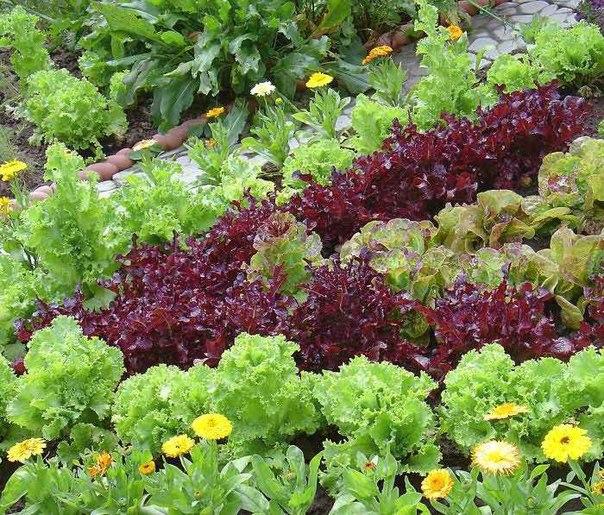 Французский огород сад огород