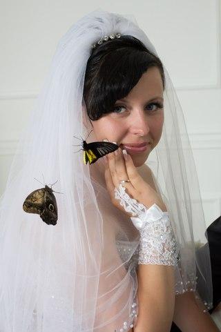 Живые тропические бабочки в старом