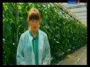 Агрогорода: гидропоника и аэропоника круглый год