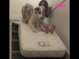 Девочка с собакой съезжают с лестницы на матрасе