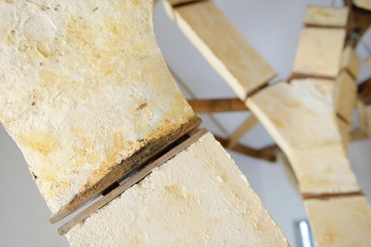 Грибы, как строительный материал