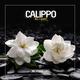 Calippo - All I Want